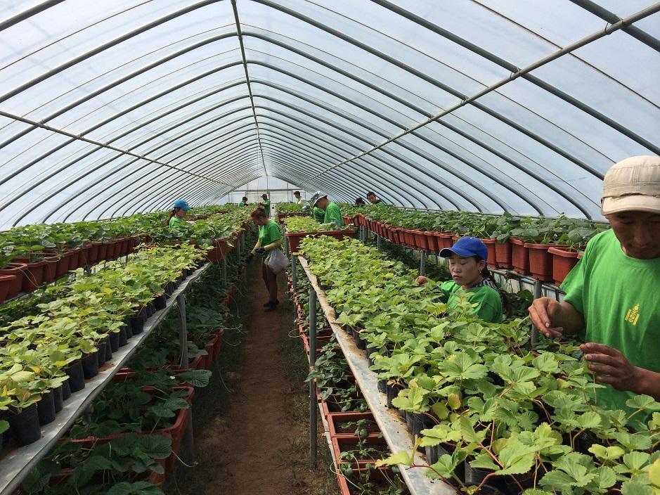 モンゴル国モンナラン農場における栽培技術改良におけるCO2削減提案