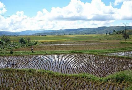 アフリカ稲作振興支援にかかる基礎調査(2009年)